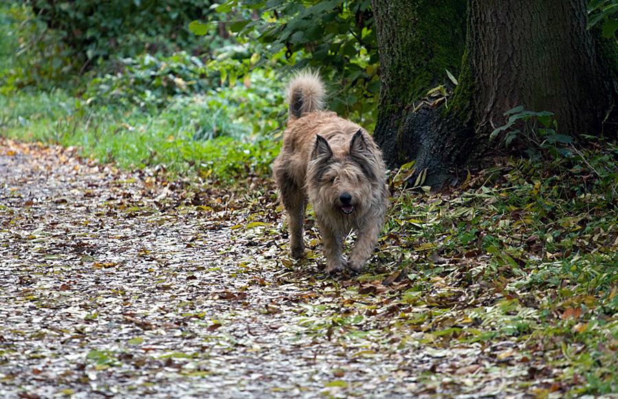 Hunde sind grunsätzlich anzuleinen - auf Waldwegen dürfen freilaufende Hunde nach dem Jagdrecht sogar erschossen werden.